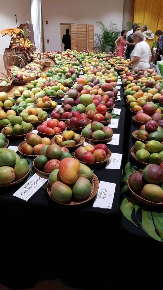 Mango festival miami