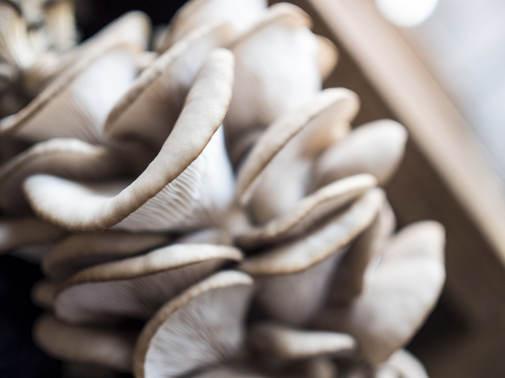 NJWFF Food Marketplace Lunch Mushrooms